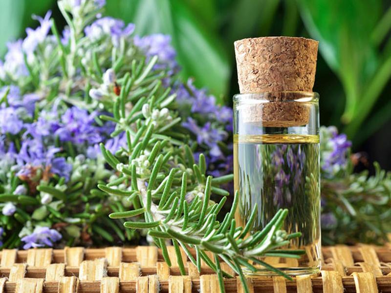 Trị gàu bằng dầu dừa và tinh dầu hương thảo